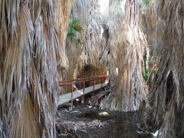 Thousand Palms Thousand Palms