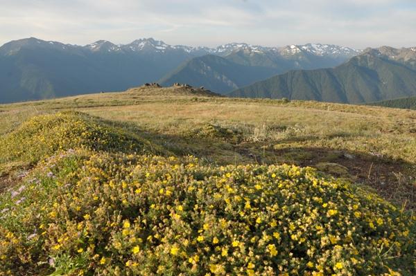 Views from Blue Mountain / Rain Shadow Loop in Olympic National Park, Washington