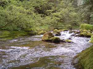 Car Lots Near Me >> Charley Creek Natural Area - Green River Watershed