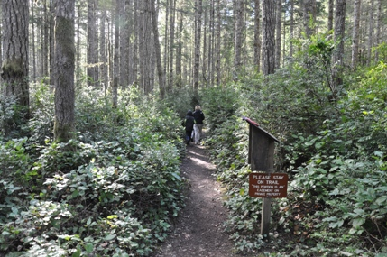 Guillemot Cove Nature Reserve Seabeck Hiking Trails