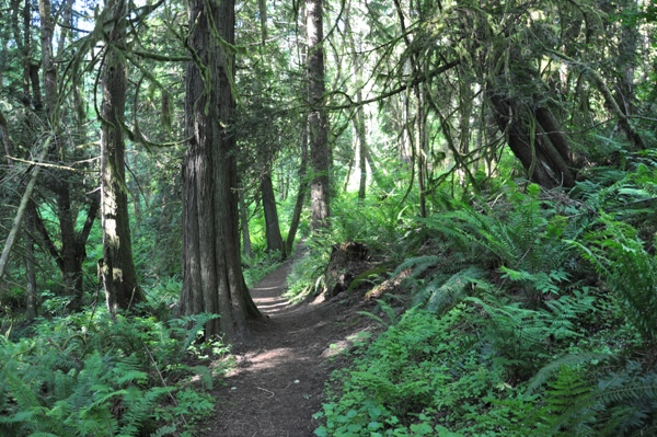 Tolmie State Park Washington Recreation