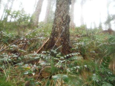 Huckleberry Mountain Lookout Lewis County Washington